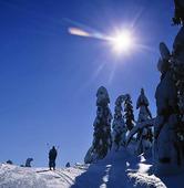 Skidåkning i vinterlandskap