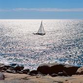 Segelbåt på glittrigt hav