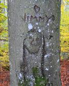 Ristat i trädstam