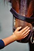 Flicka klappar häst