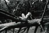 Naken kvinna på trädstam