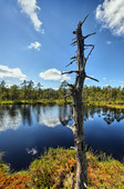 Swamp in Sweden