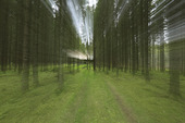 Hus vid skogens slut
