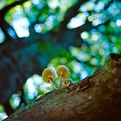 Svamp i träd