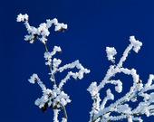 Snö på grenar
