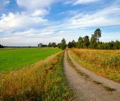 Grisväg i landskap