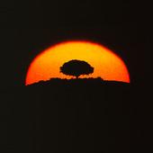 Träd i solnedgång (montage)