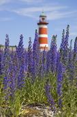 Blåeld på Gotland