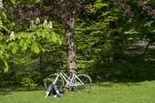 Cykel med cyklist
