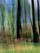 Oskarpa träd
