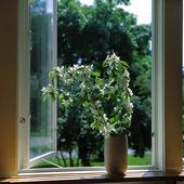 Blommor i fönster