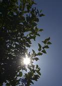Solen lyser i lövträd