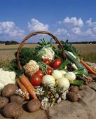 Grönsaksskörd