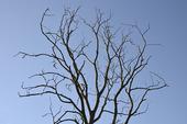 Trädgrenar mot himmel