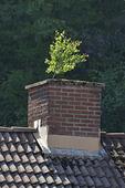 Träd som växer i skorsten