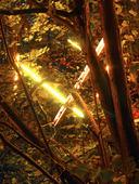 Belysning i skog