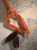 Skaldjur på sjökort