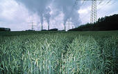 Cornfields at power plant