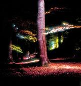 Människa i belyst skog