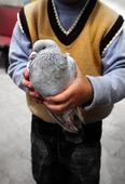 Barn med duva i handen
