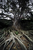Trädrötter