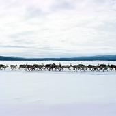 Renar, Lappland