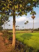 Kambodjanska Landskap