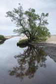 Träd i spegling