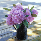 Rhododendron i vas