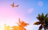 Flygplan ovan palmträd