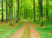 Mindre väg i bokskog
