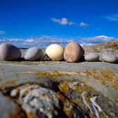 Ägg bland stenar