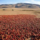 Peppar på tork, Marocko