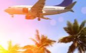 Palm och flygplan