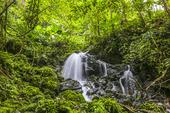 Vattenfall i regnskogen