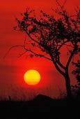 Solnedgång vid träd