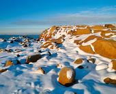 Snö på klippor