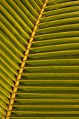 Detalj av palmblad