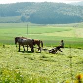 Jordbruksarbete med häst