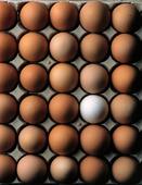 Bruna ägg och ett vitt ägg