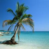 Palm på strand, Thailand