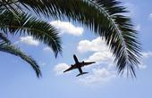 Flygplan som flyger över palmträd