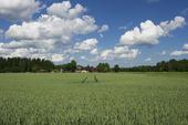 Bondgård och vetefält