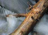 Trädgren i strömmande vatten