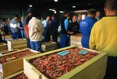 Fiskauktion i Göteborgs Fiskhamn