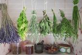 Örtväxter