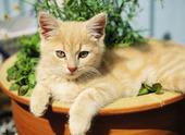 Katt i blomkruka