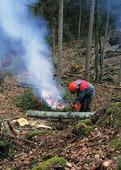 Skogsvård
