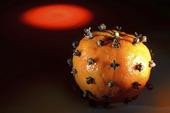 Clementin med kryddnejlikor