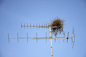 Skatbo i antenn